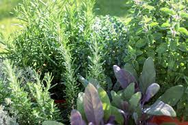 How To Make The Most of Your Herb Garden-Come Tomorrow!